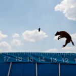 Your Wednesday Cute: Little Super Heroes and the Best Canine Sport Ever