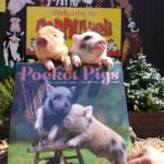 Your Wednesday Cute: Pocket Pigs of @PennywellFarm, @PreschoolGems, and @TextsFromDidi