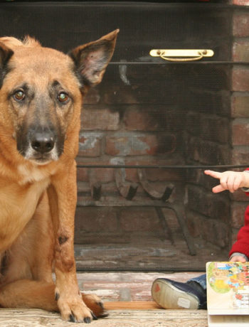 Pet behavior myths