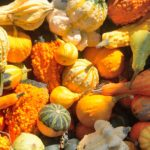 How to Prep Butternut Squash (and 5 Fall Squash Recipes)
