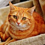 Is Cat Litter Bad For Your Cat?