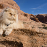 Purr-sonality Quiz: Is My Cat an Adventure Cat?
