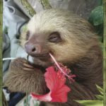 Beat the Winter Blues With Some Pictures of Sloths…