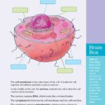 Absolutely Cell-tastic Labeling Activity!<em>Brain Quest</em> for Grade Five